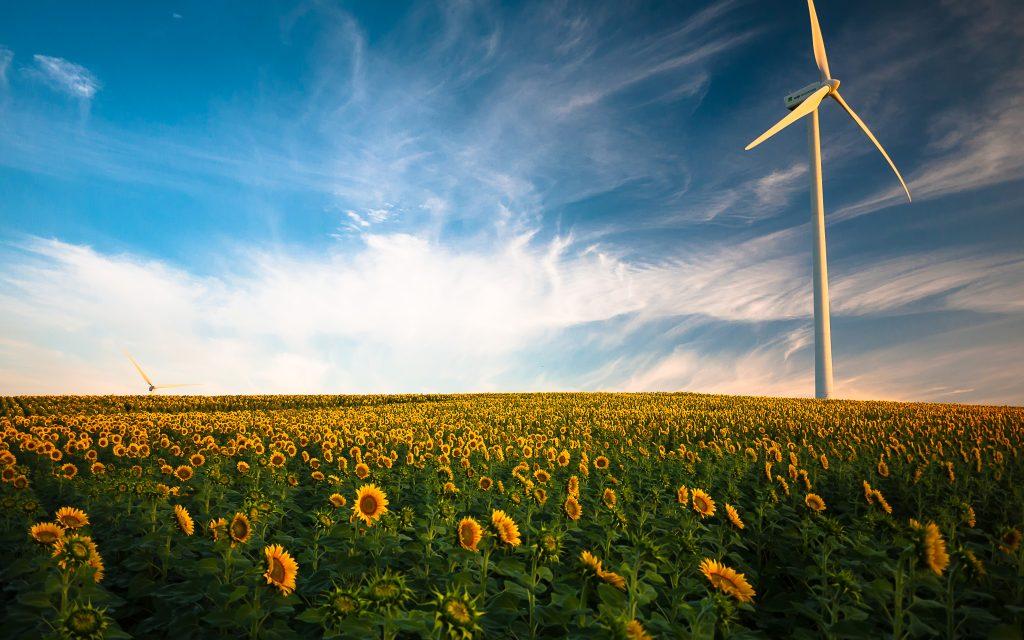 Wind turbine sunflower field. обои скачать