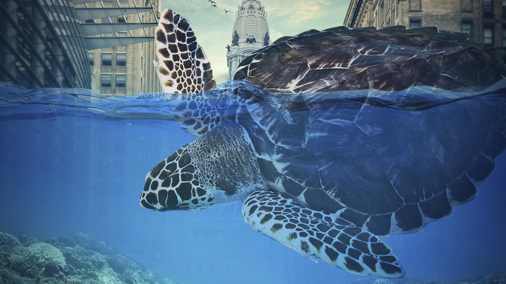 Гигантская черепаха обои скачать