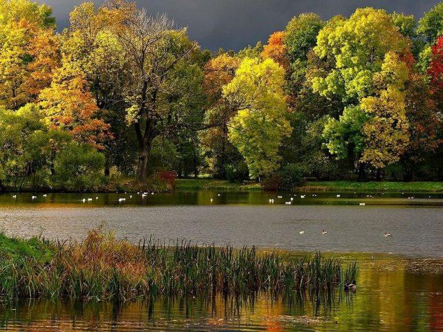 Желтый зеленый красный осенние листья деревья трава птицы река черные облака небо осень