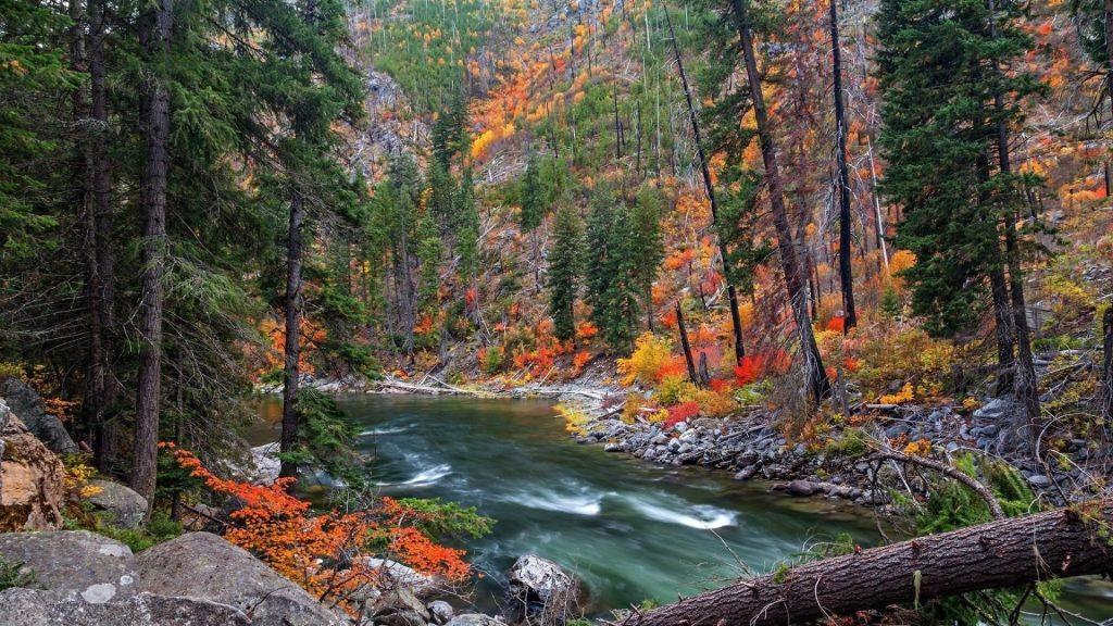 Озеро водный поток в окружении зеленых красных желтых деревьев природа обои скачать