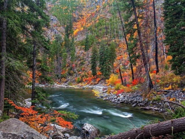 Озеро водный поток в окружении зеленых красных желтых деревьев природа
