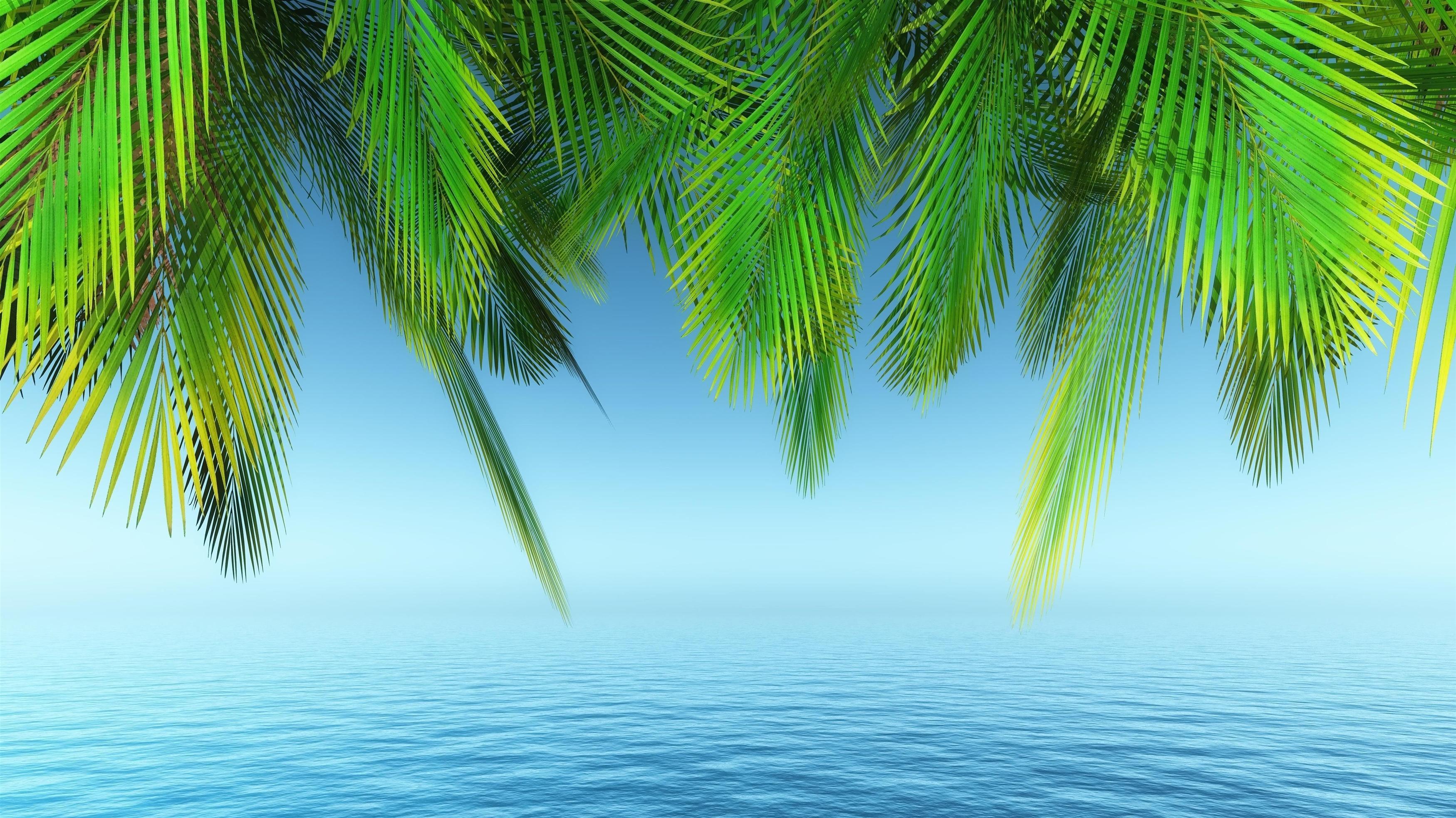 Земля пальма под голубым берегом природа обои скачать