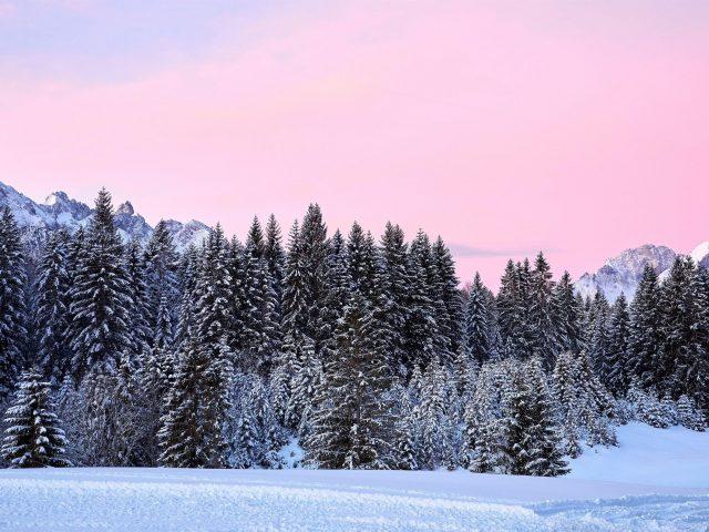 Горы деревья розовый снег