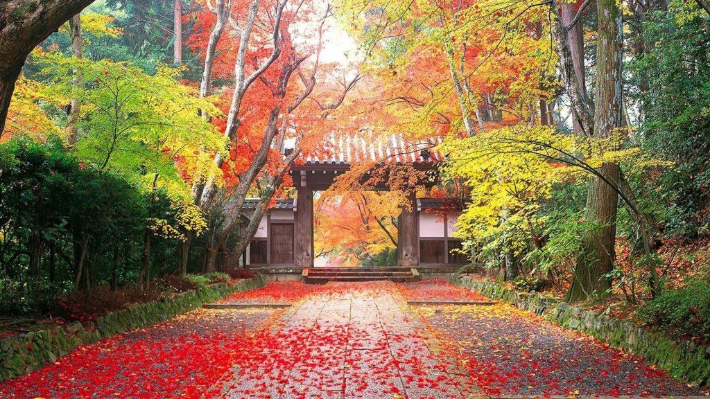 Красные листья на земле тропинка между красочными деревьями природа обои скачать