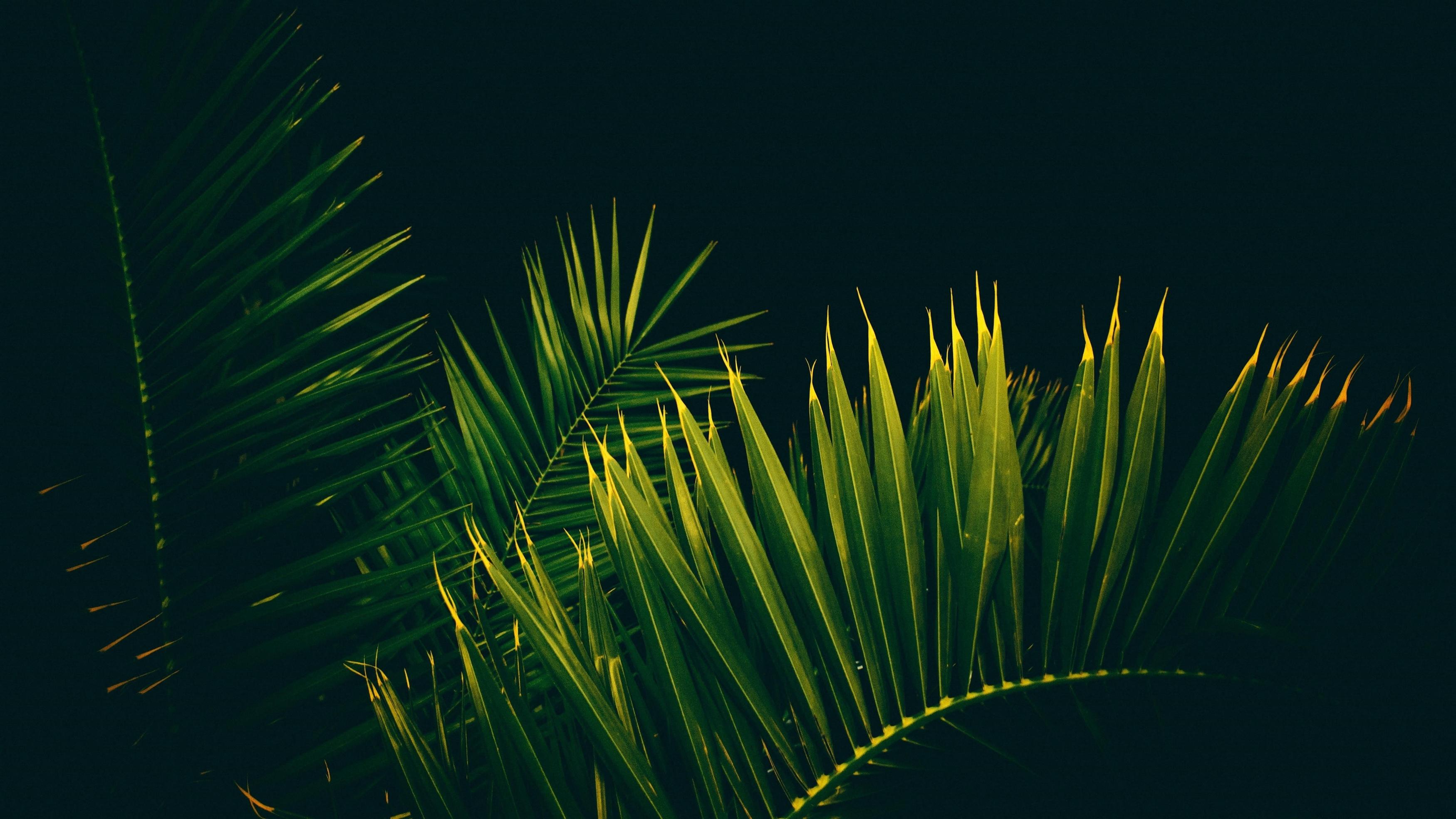 Пальмовое дерево листья ветви обои скачать