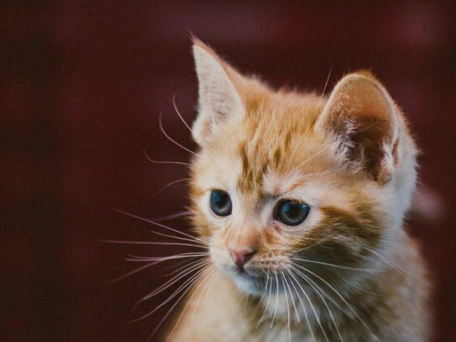 Коричневый белый кот котенок в размытом фоне котенок
