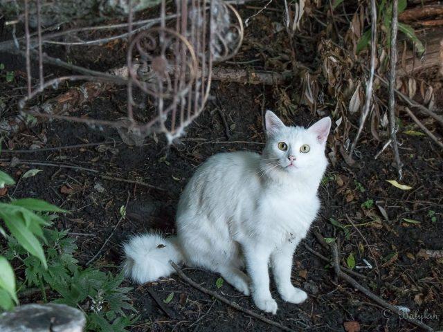 Белая меховая кошка сидит на земле милая кошка