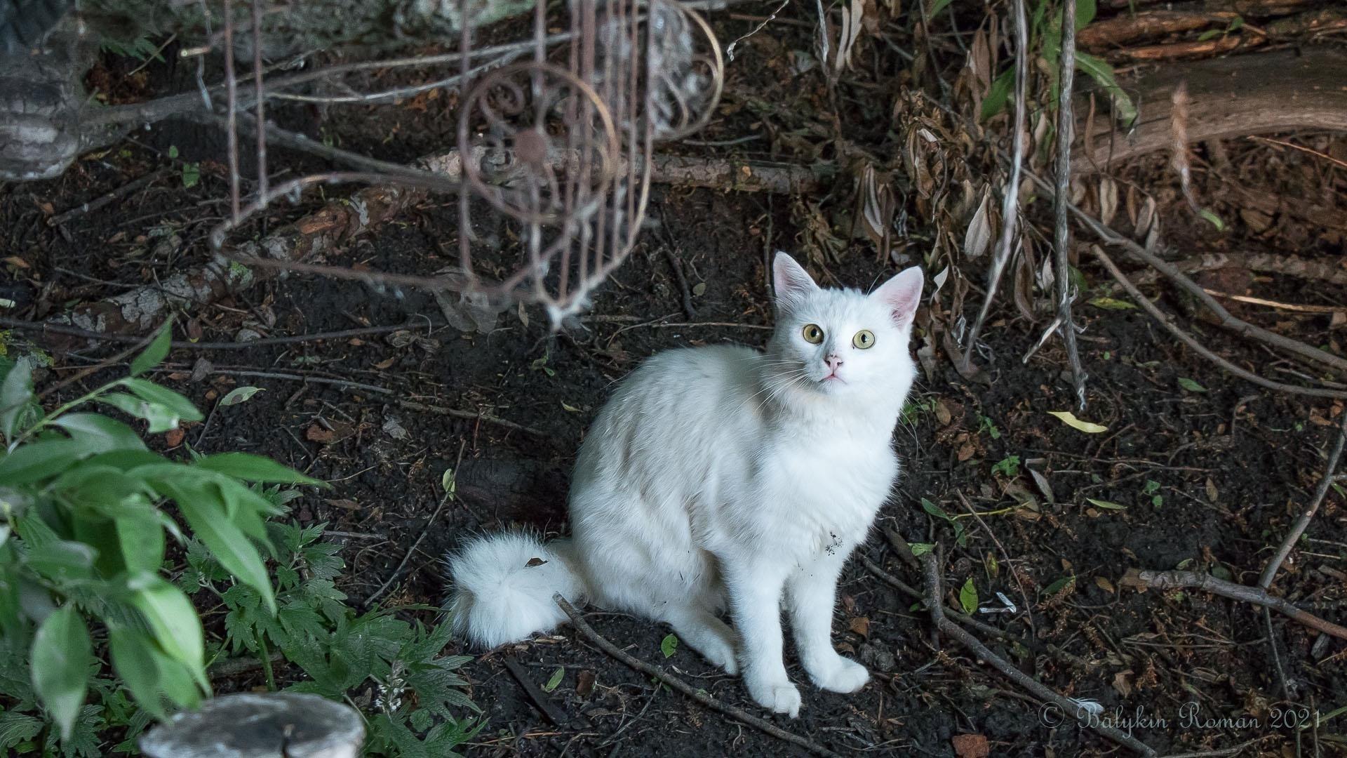 Белая меховая кошка сидит на земле милая кошка обои скачать