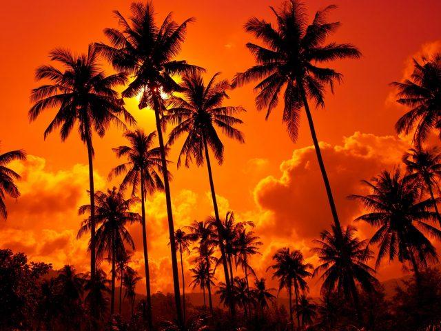 Красивые красные облака под кокосовыми пальмами во время заката природа
