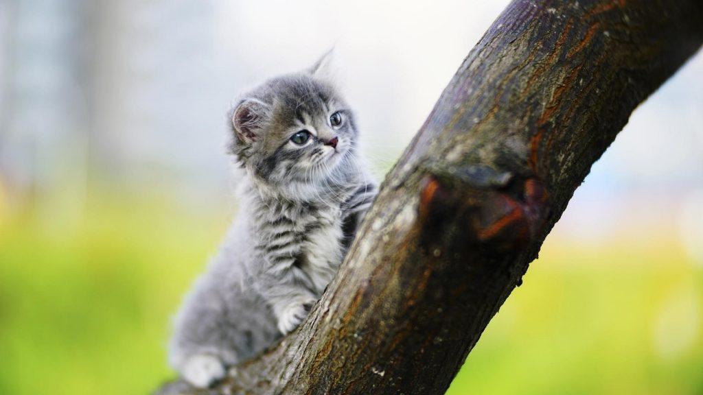 Белый черный кот котенок сидит на стволе дерева в размытом фоне котенка обои скачать