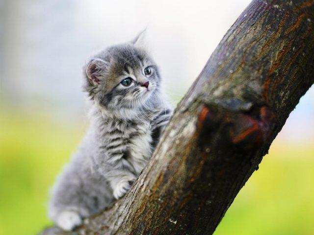 Белый черный кот котенок сидит на стволе дерева в размытом фоне котенка