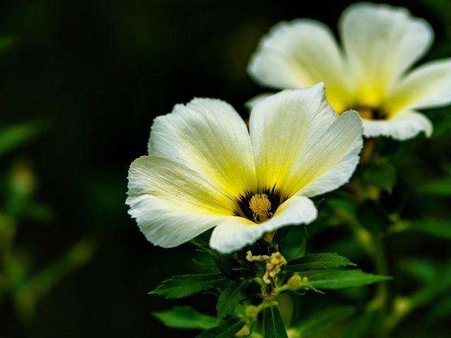 Желтые белые цветы с листьями цветы