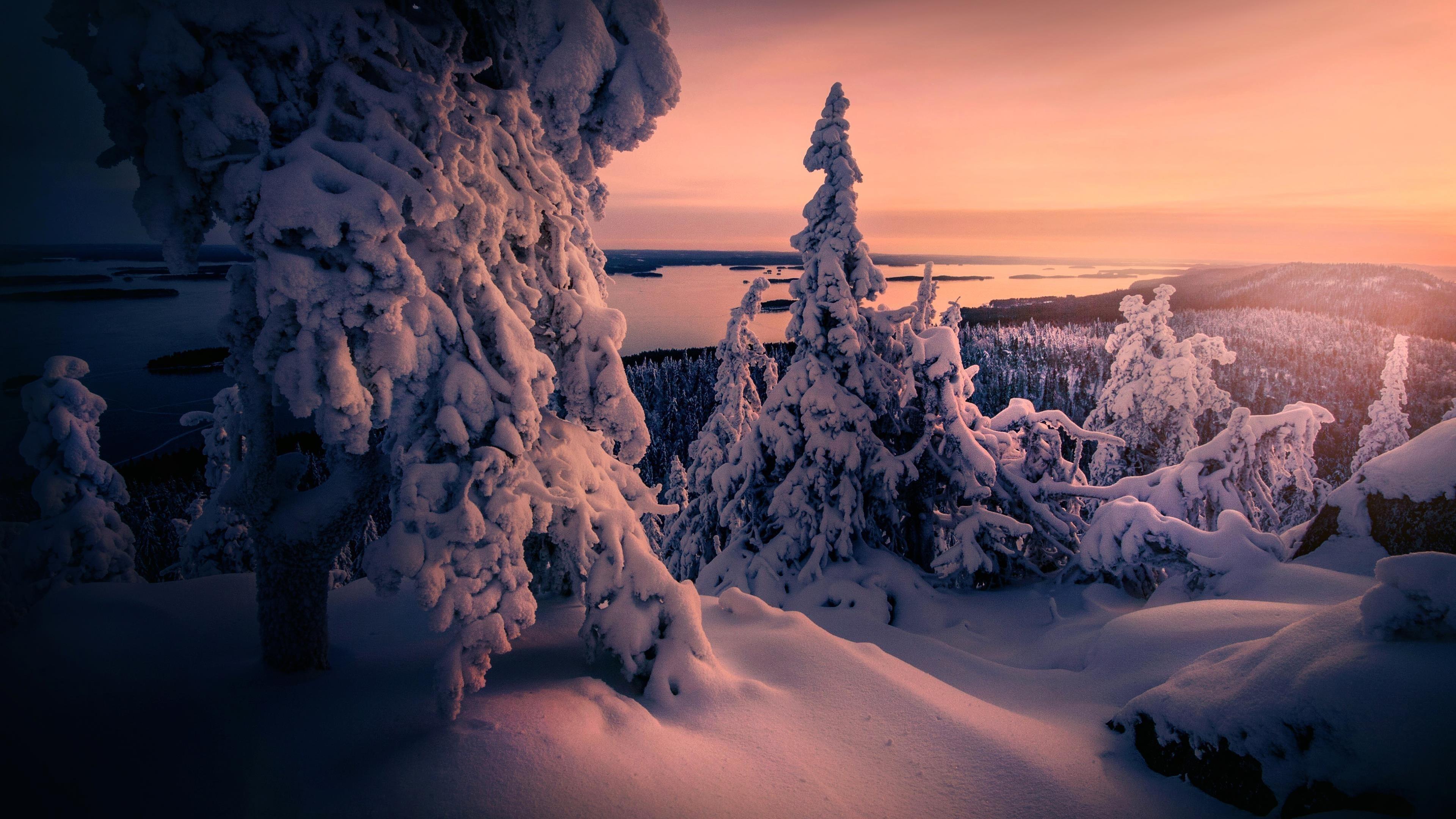 Зимние заснеженные деревья обои скачать