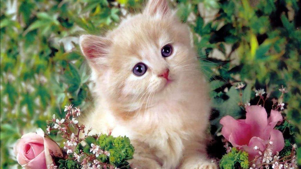 Светло коричневая белая кошка котенок сидит посреди цветов растений котенок обои скачать