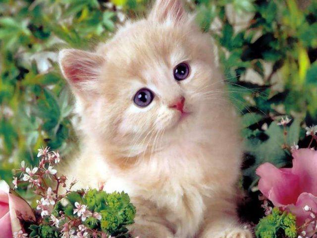 Светло коричневая белая кошка котенок сидит посреди цветов растений котенок