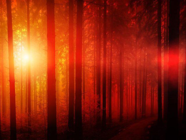 Солнечный день в лесу