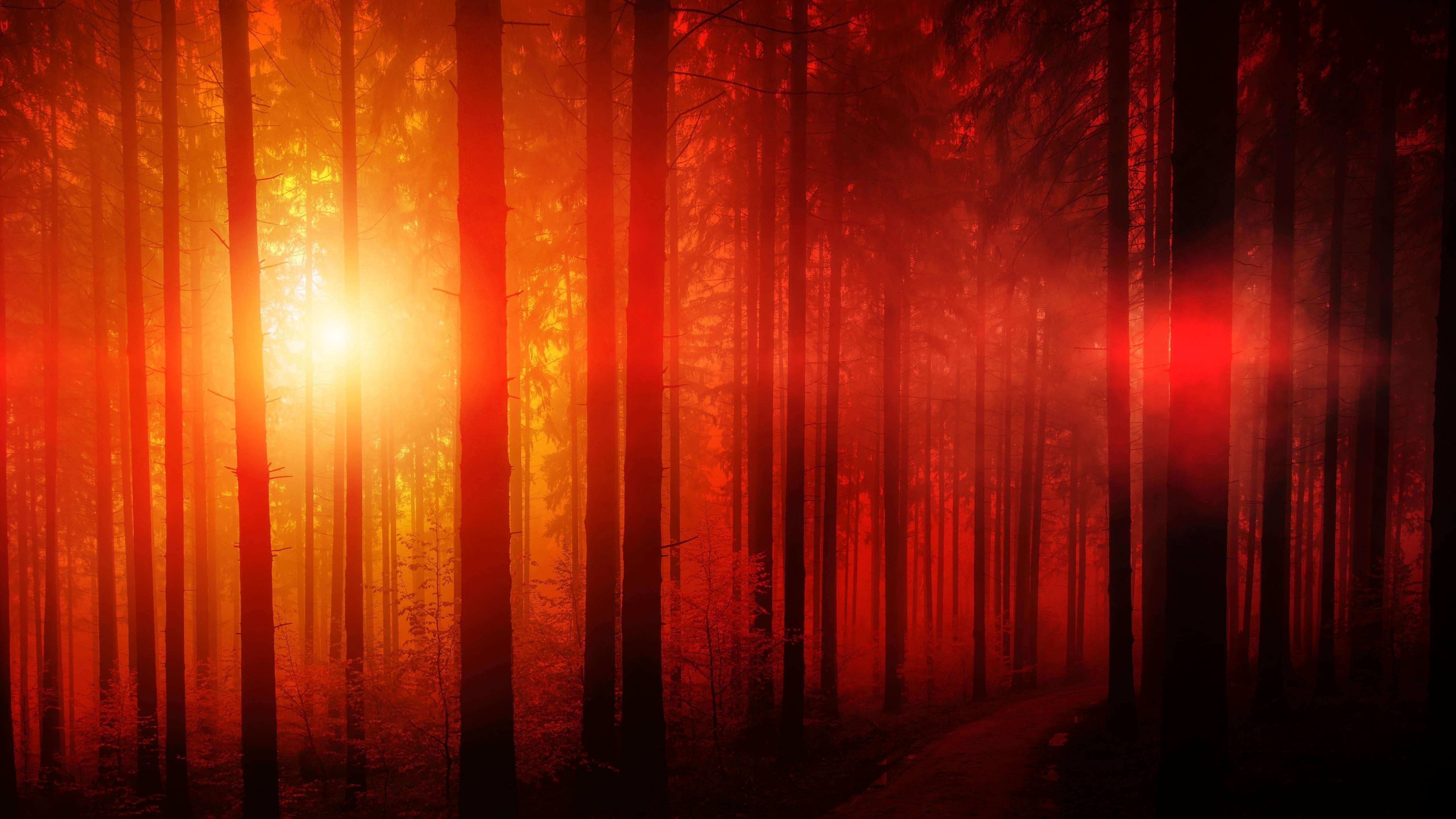 Солнечный день в лесу обои скачать