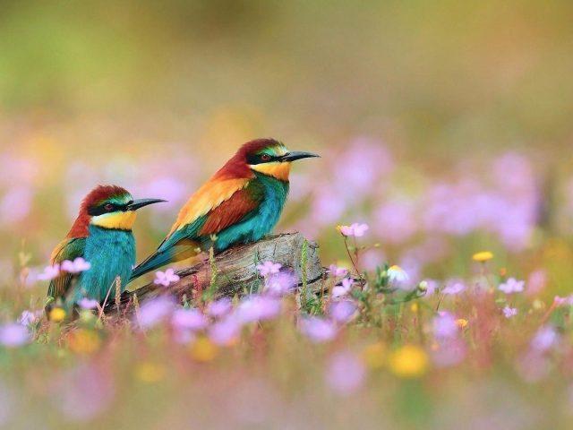 Две зеленые красно желтые птицы с острым носом сидят на стволе дерева в размытом цветочном фоне животные