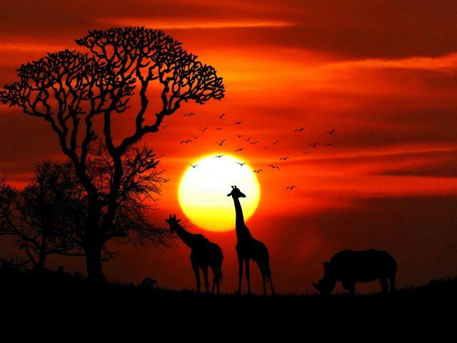 Закат животных