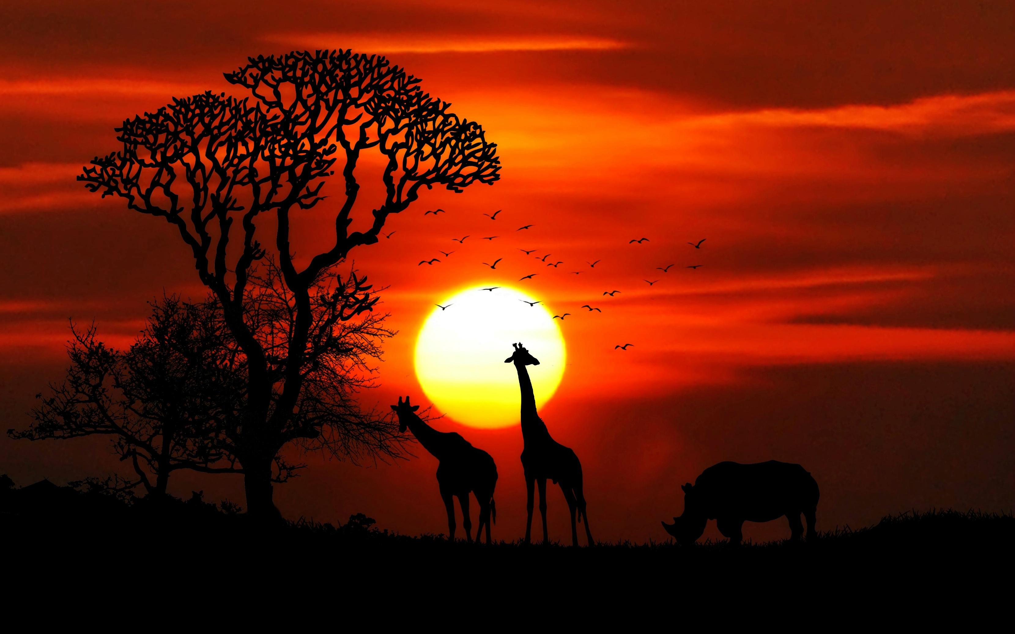 Закат животных обои скачать