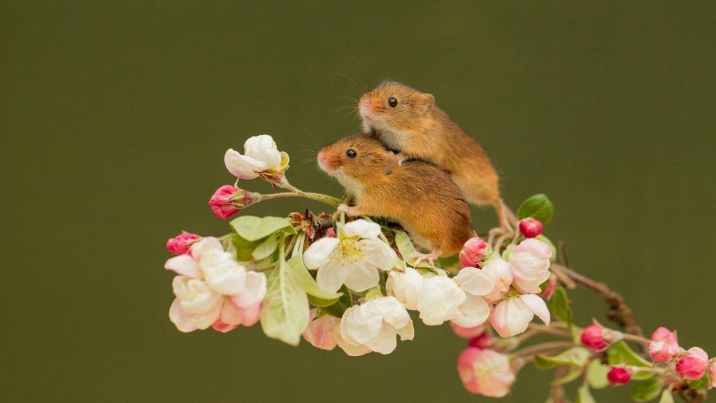 Две мыши стоят на цветочном стебле растения на зеленом фоне мыши обои скачать