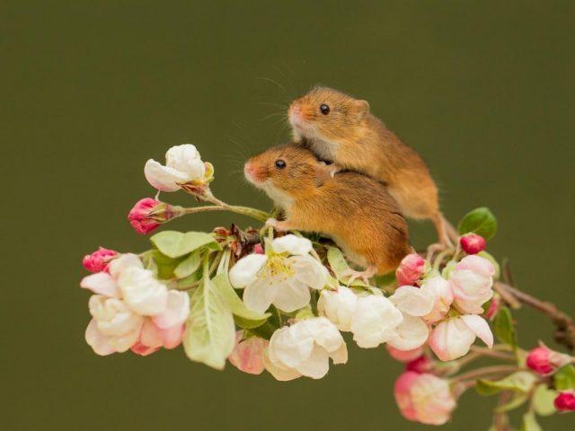 Две мыши стоят на цветочном стебле растения на зеленом фоне мыши