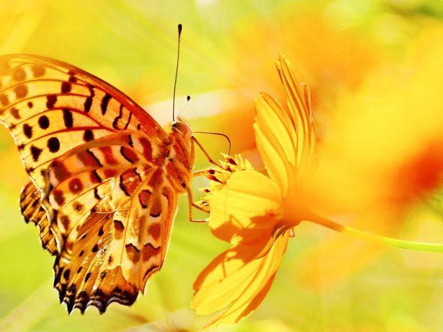 Желто-коричневые точки, выполненные бабочкой на желтом цветочном зеленом желто-синем фоне бабочки