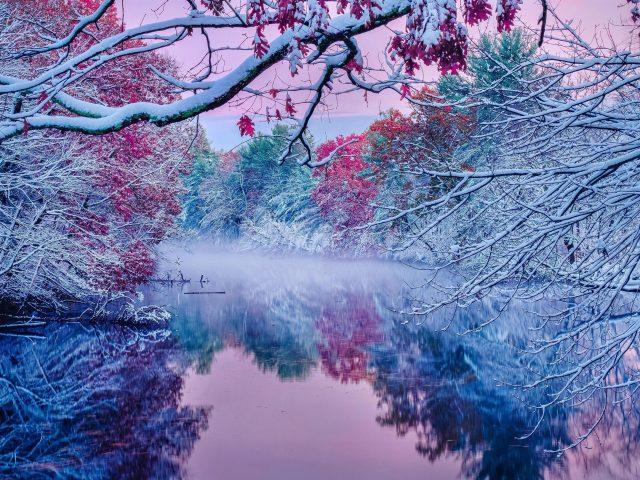 Замерзшие цветущие деревья с отражением речной природы
