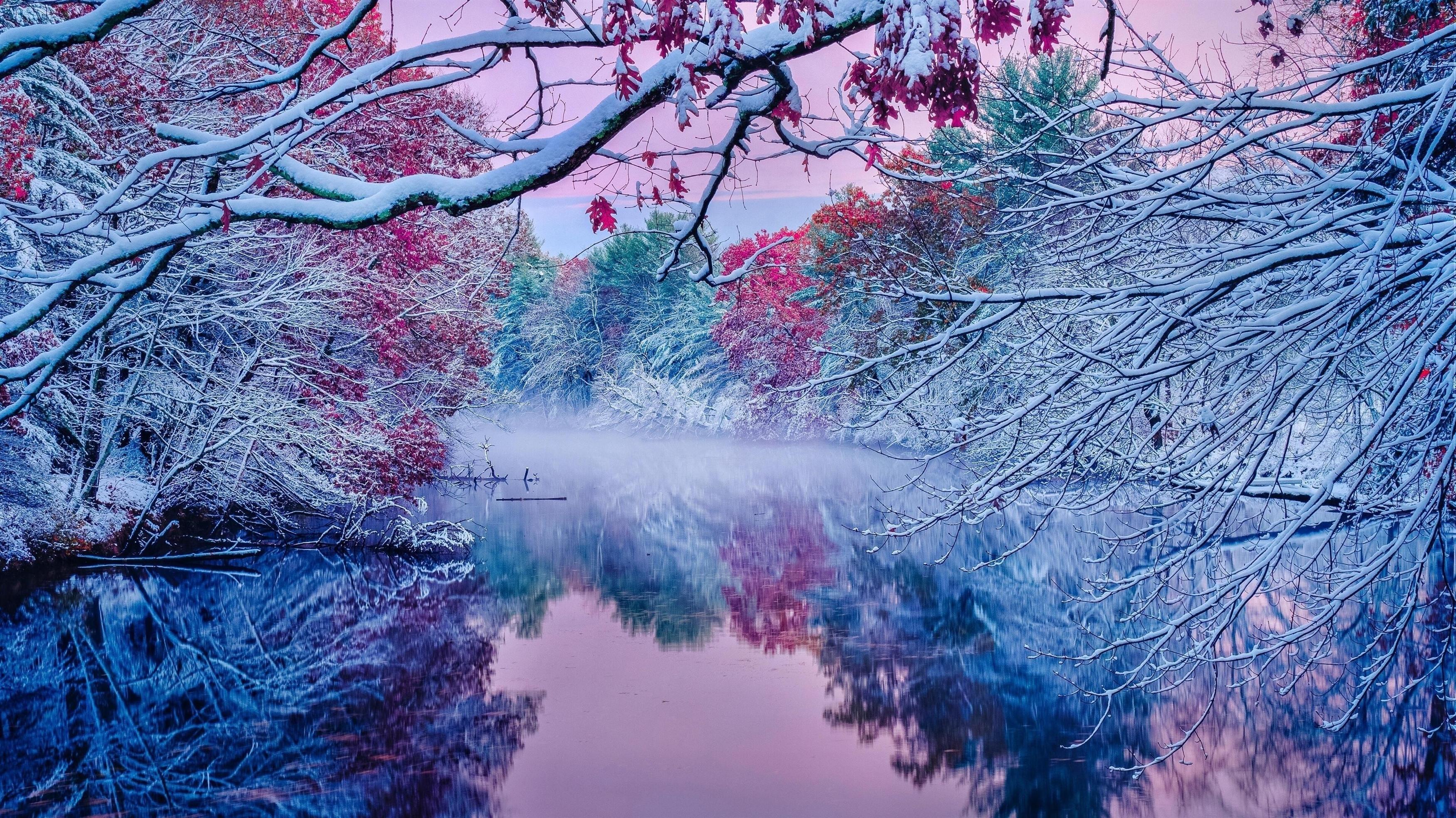 Замерзшие цветущие деревья с отражением речной природы обои скачать