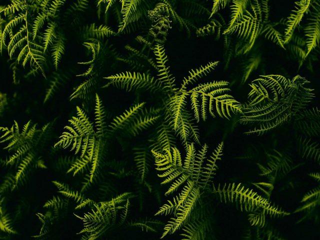 Ветви папоротника листья растений