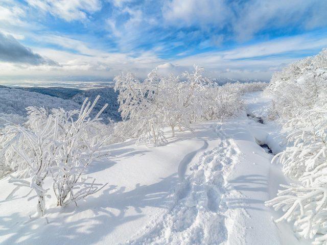 Россия снег дерево на зиму с облаками и голубым небом фон природа