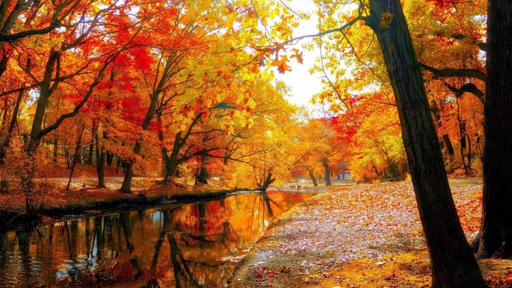 Река с отражением красно желтых осенних листьев деревьев в лесу под белым небом природа обои скачать