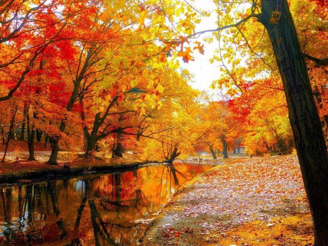 Река с отражением красно желтых осенних листьев деревьев в лесу под белым небом природа
