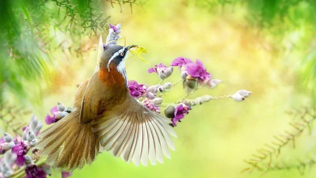 Коричневая птица с острым клювом сидит цветы ветви дерева птицы обои скачать