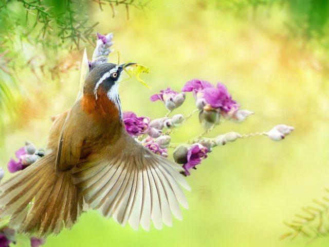 Коричневая птица с острым клювом сидит цветы ветви дерева птицы