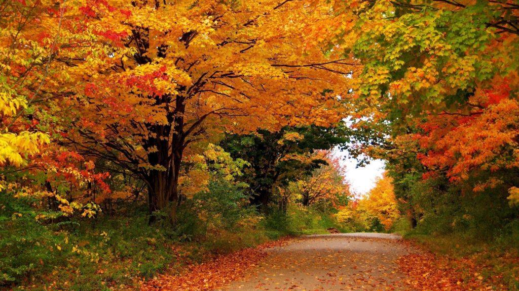Времена года осень деревья листва природа обои скачать