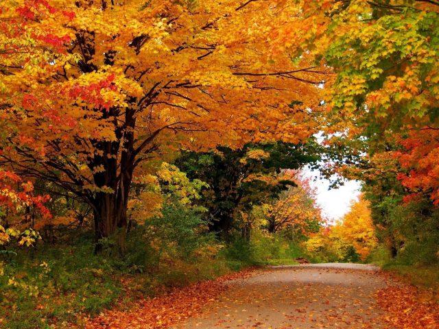 Времена года осень деревья листва природа