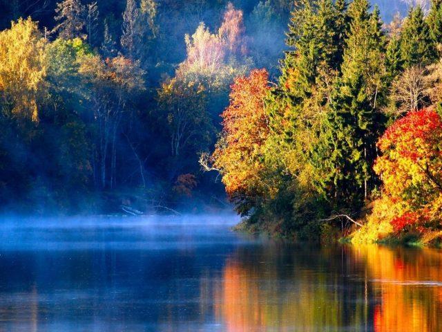 Красочные деревья отражение на водоеме в лесной природе