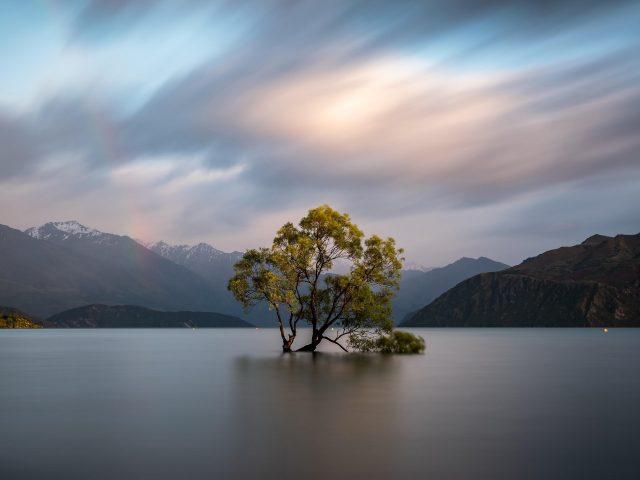 Соло дерево озеро облака