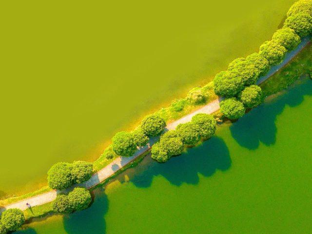 Зеленый пейзаж с высоты птичьего полета