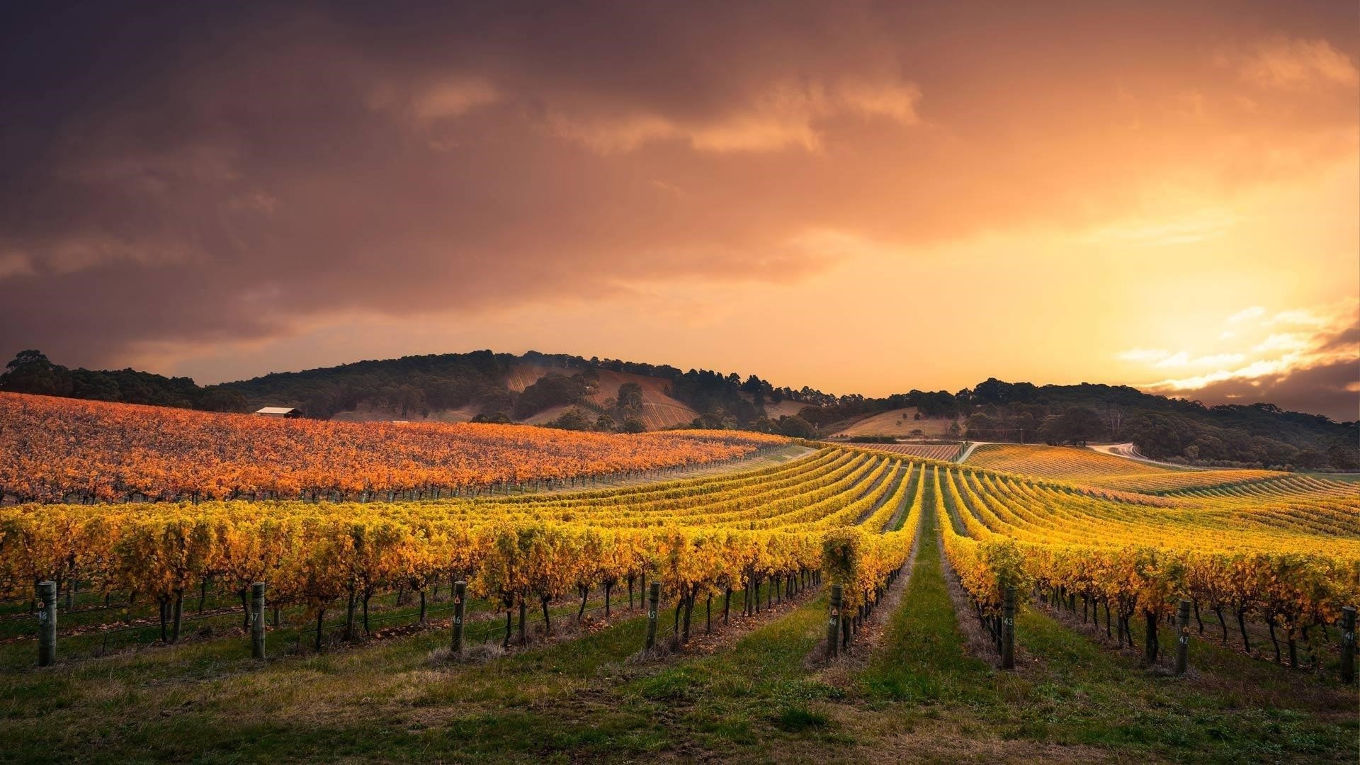 Виноградник поле облака обои скачать