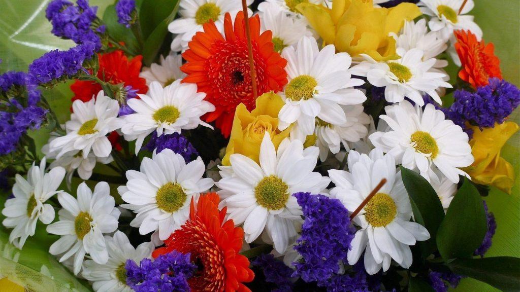 Красочные цветы флора цветы обои скачать