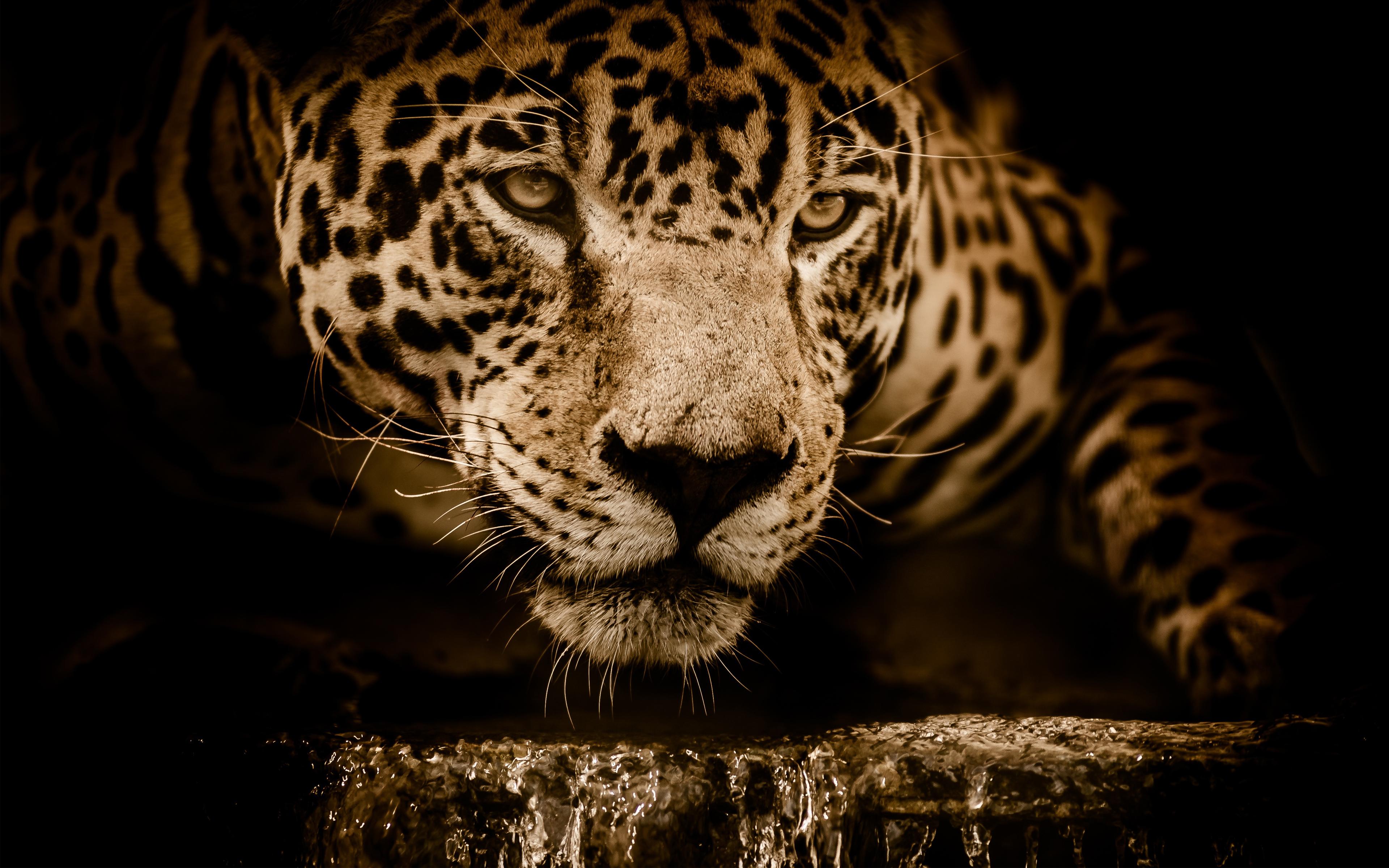 Удивительный Jaguar обои скачать