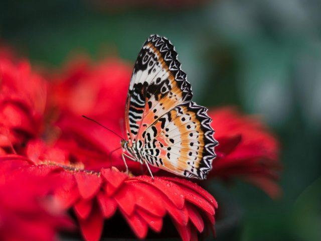 Крылья бабочки яркое цветочное пятно