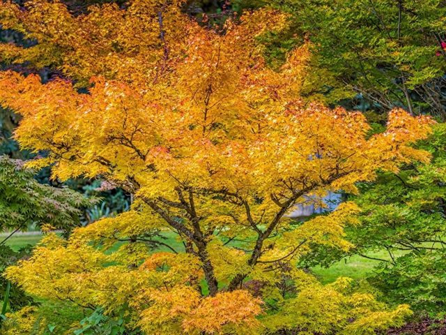 Красивые пейзажи желтый зеленый оранжевый фиолетовый осенние листья деревья осень