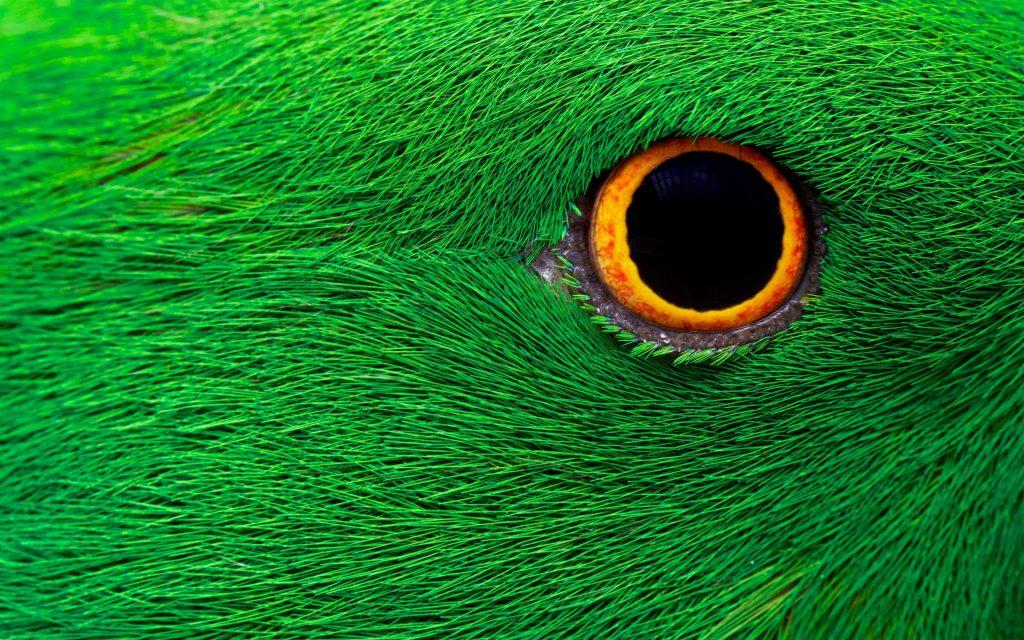Глаз попугая картинки