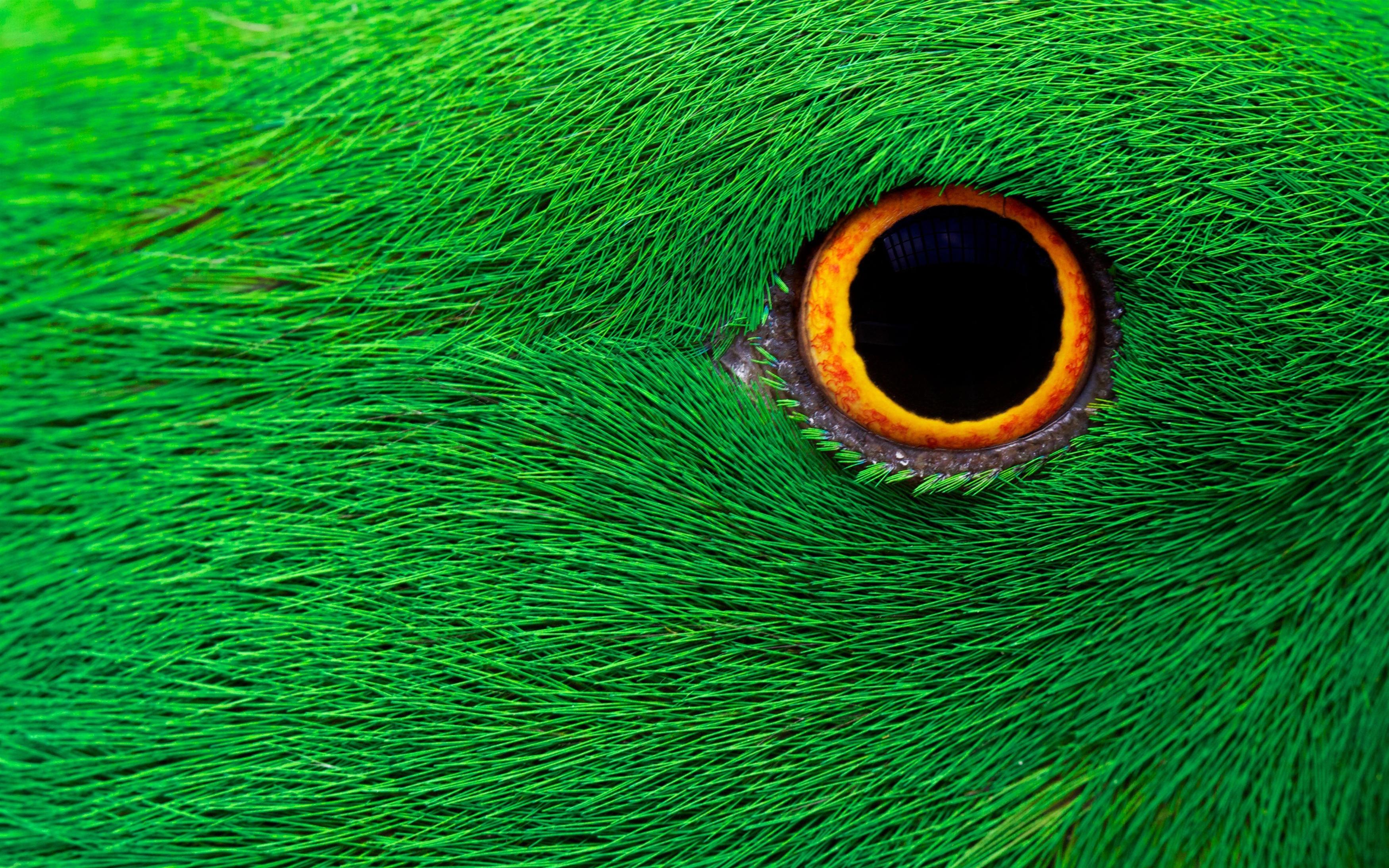 Попугай глаз обои скачать