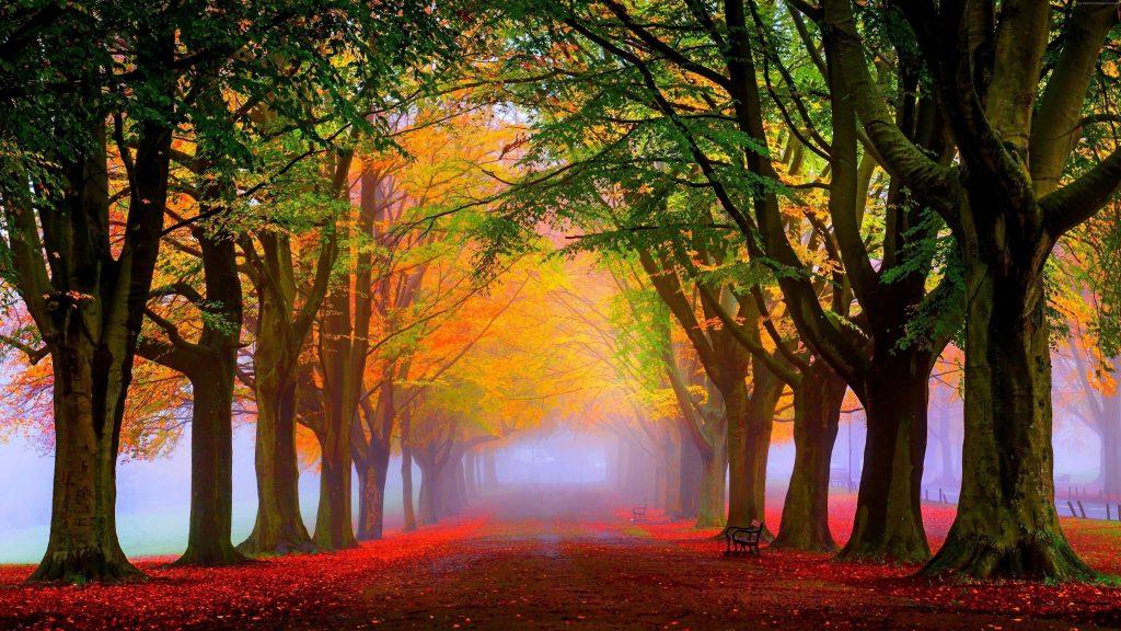 Тропинка с красными осенними опавшими листьями между красочными деревьями в парке природы обои скачать