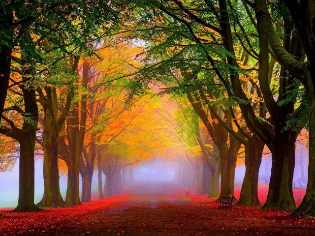 Тропинка с красными осенними опавшими листьями между красочными деревьями в парке природы