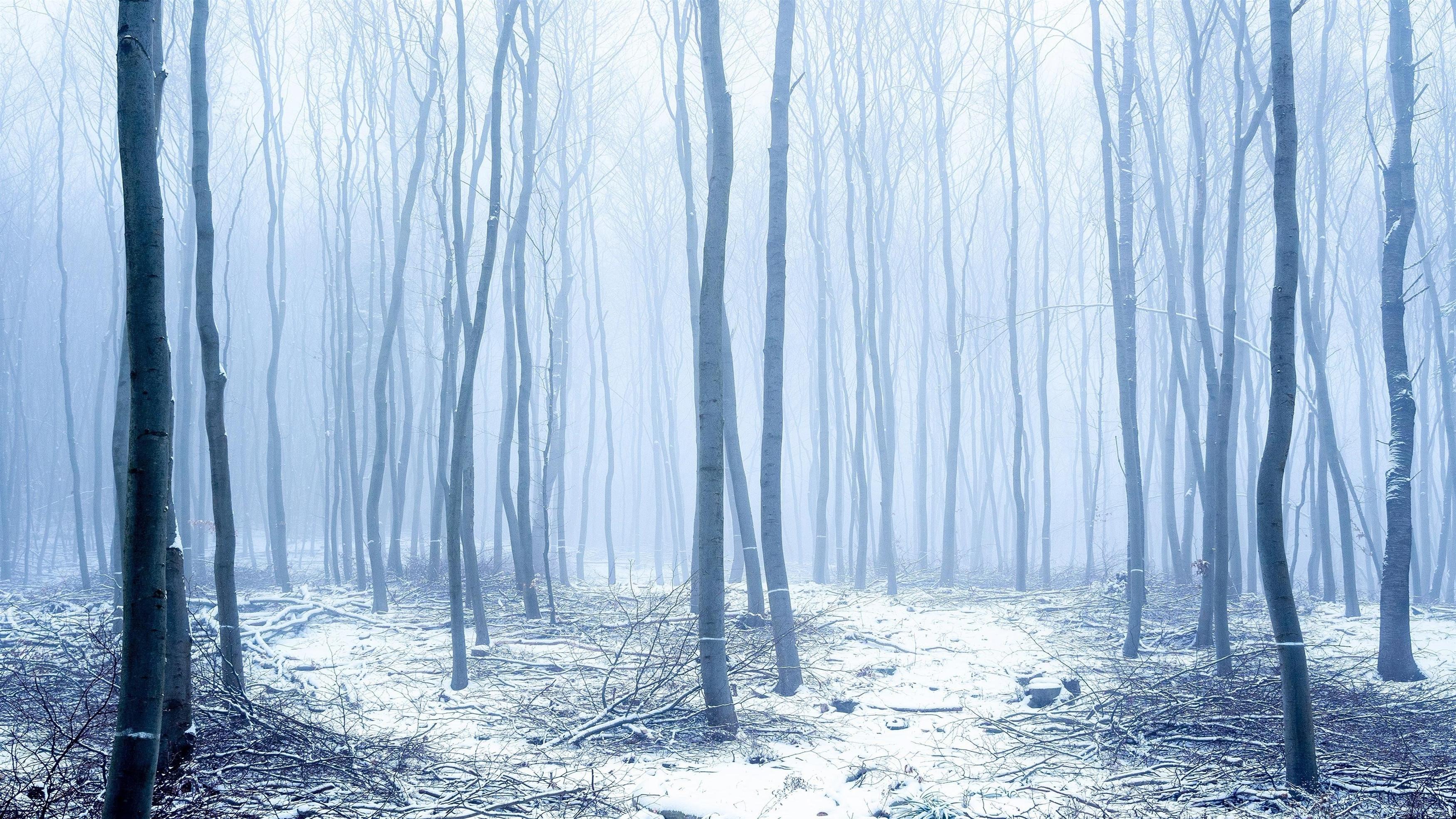 Заснеженный ствол леса с туманом зимой обои скачать
